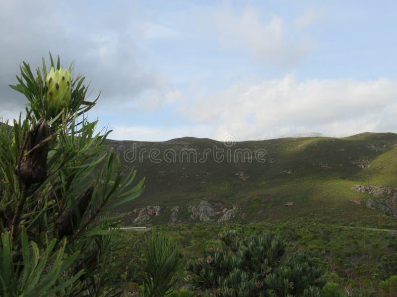 Великолепие горы стоковое фото rf