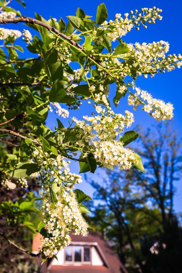 Великолепие цветка весны стоковая фотография rf