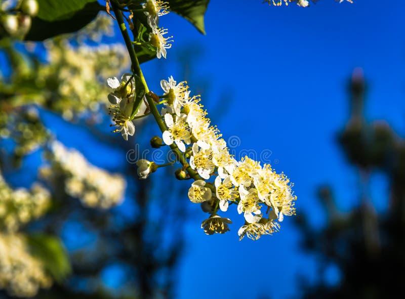 Великолепие цветка весны стоковое фото