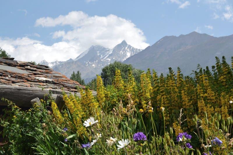 Великолепие цветка в швейцарских горных вершинах стоковое фото