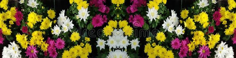 Великолепие цветка на еженедельном рынке стоковые фотографии rf