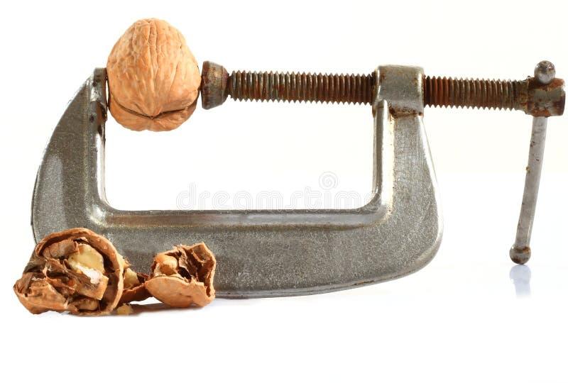 великолепный грецкий орех стоковые изображения