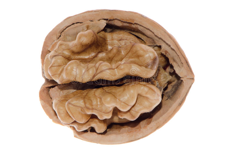 великолепный грецкий орех стоковое изображение rf