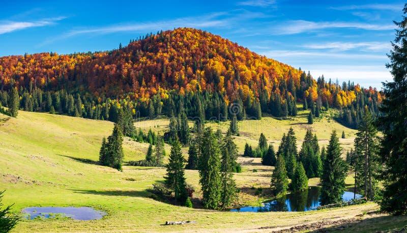 Великолепный ландшафт осени на яркий день стоковая фотография rf