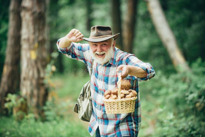 Величающ в лесе, грибы звероловства деда над предпосылкой леса лета стоковое изображение
