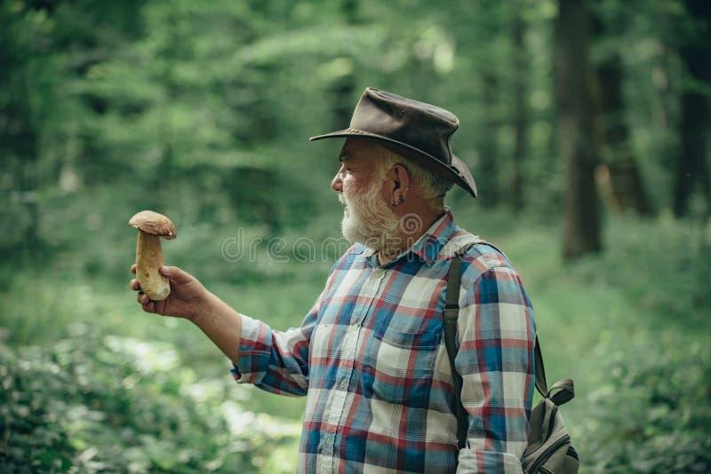 Величающ в лесе, грибы звероловства деда над предпосылкой леса лета Старшее mushroomer Весна и стоковое изображение