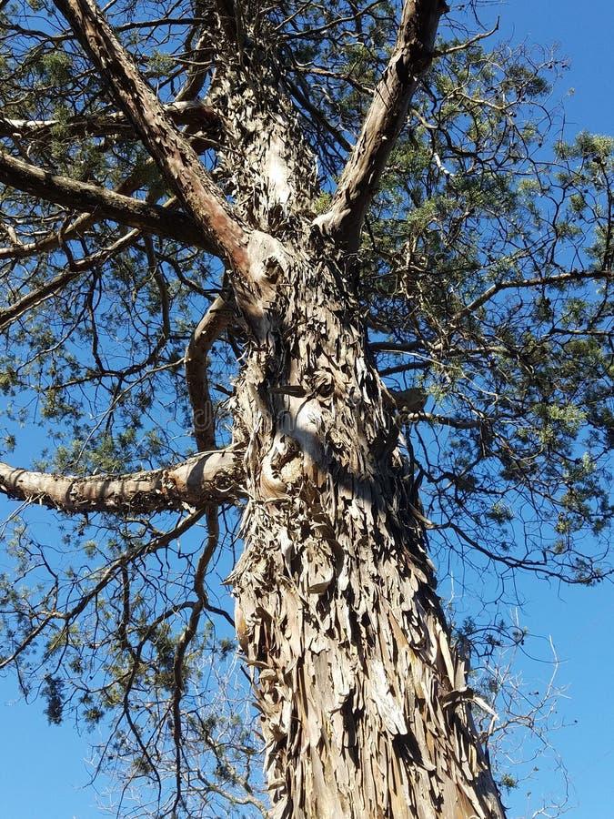 Величественное дерево стоковое изображение rf