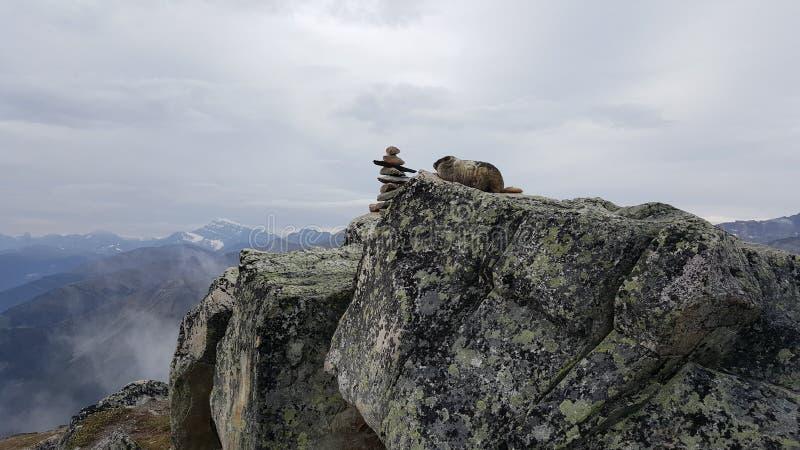 Величественные грызуны мира стоковое фото rf