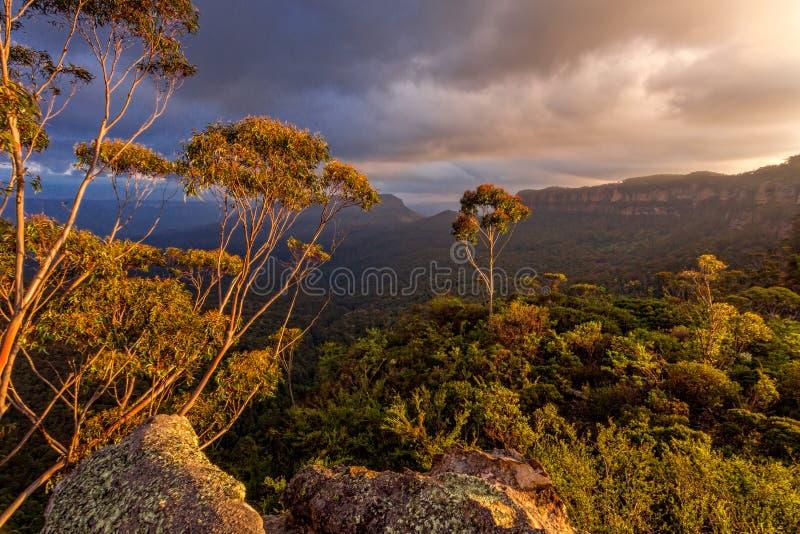 Величественный свет после полудня в голубых горах стоковые фото