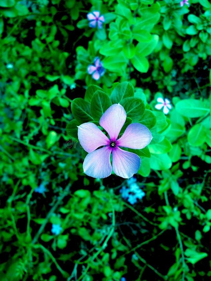 Величественный цветок стоковые изображения rf