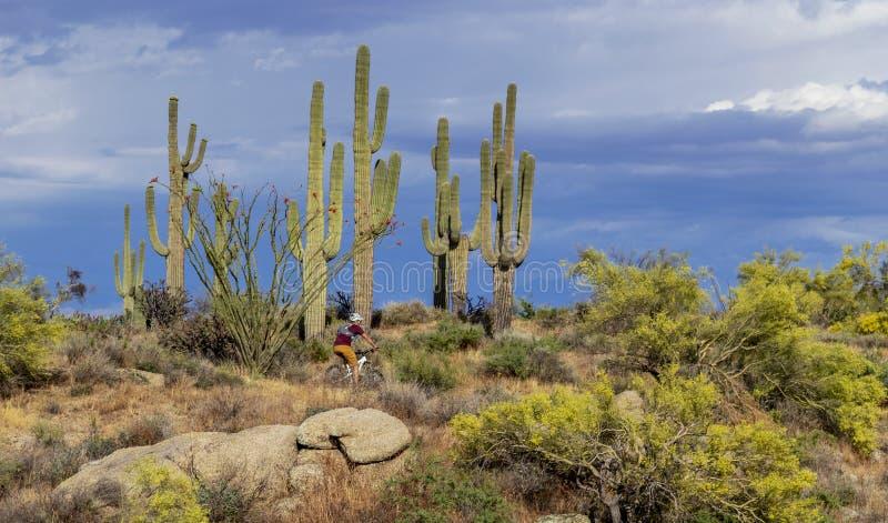 Велосипедист горы в Аризоне стоковое фото