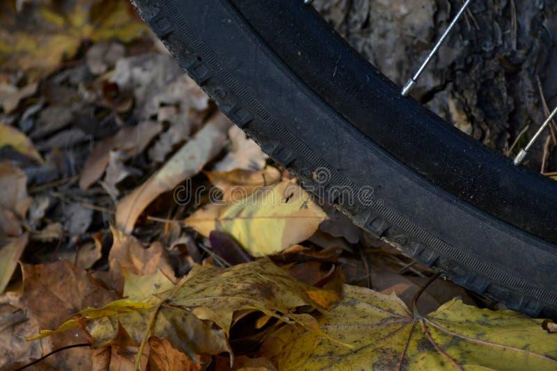 Велосипед и осень стоковое изображение rf