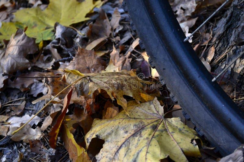 Велосипед и осень стоковые изображения