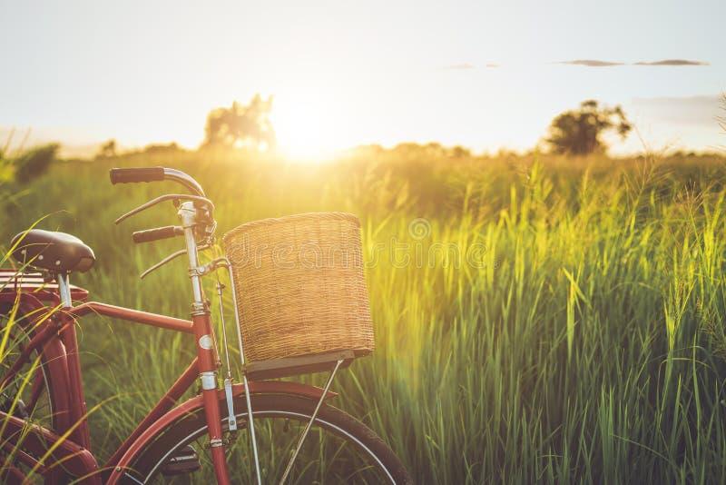 Велосипед красного стиля Японии классический на зеленом поле стоковое изображение rf