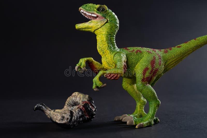 Велоцираптор с телом динозавра рядом на темноте стоковое изображение rf