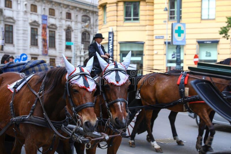 ВЕНА, АВСТРИЯ - 26-ОЕ АПРЕЛЯ 2019: Экипажи лошади вычерченные на городе стоковое изображение rf
