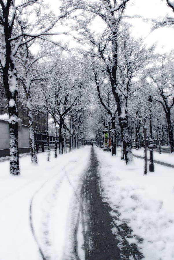 вена путя снежная стоковые изображения