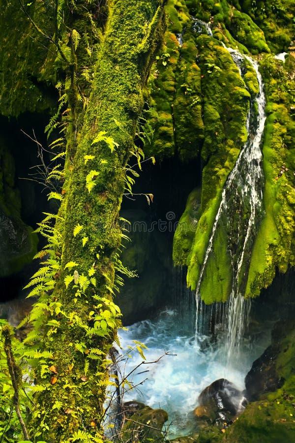 вена реки горы стоковое фото rf