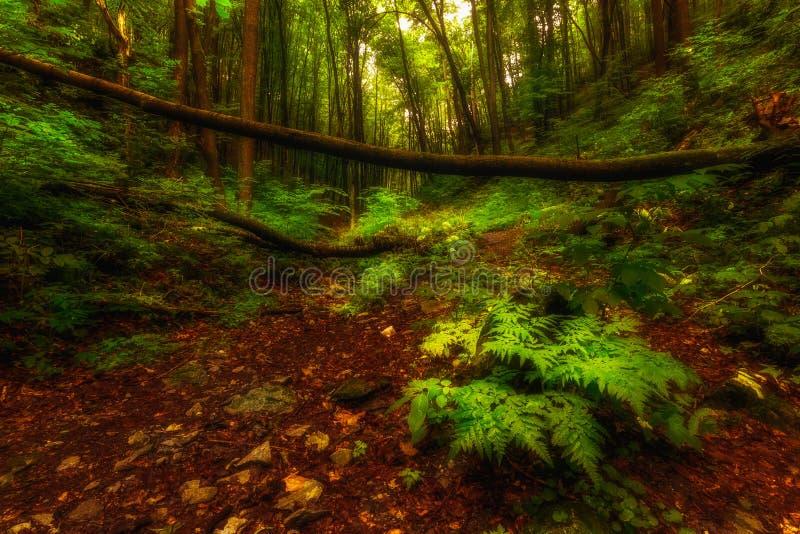 Венгерский пол леса стоковые изображения rf