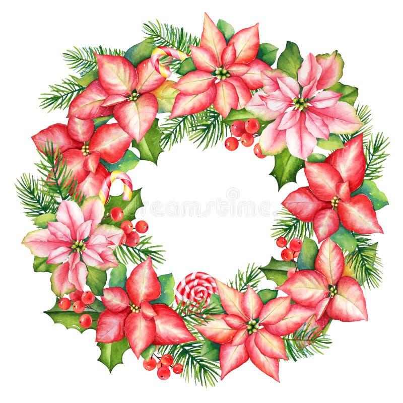 Венок акварели от цветков poinsettia, ветвей падуба и сосны и помадок иллюстрация штока
