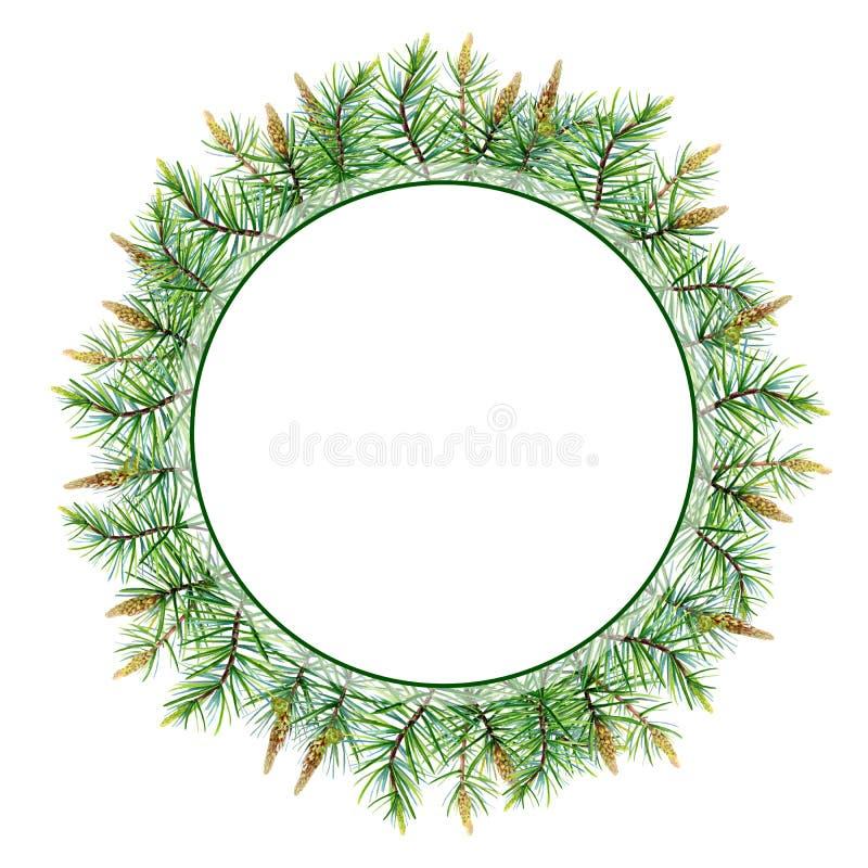 Венок веселого рождества акварели с сосной, спрусом на белой предпосылке иллюстрация штока