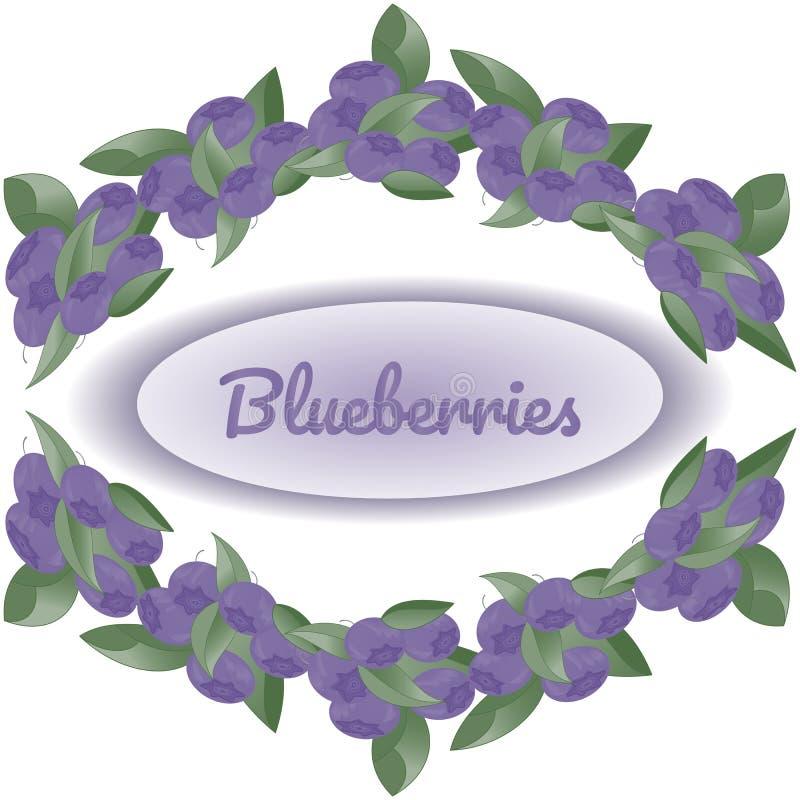 Венок кустов голубик на белой предпосылке, в разбивочном тексте Blueberryies иллюстрация вектора