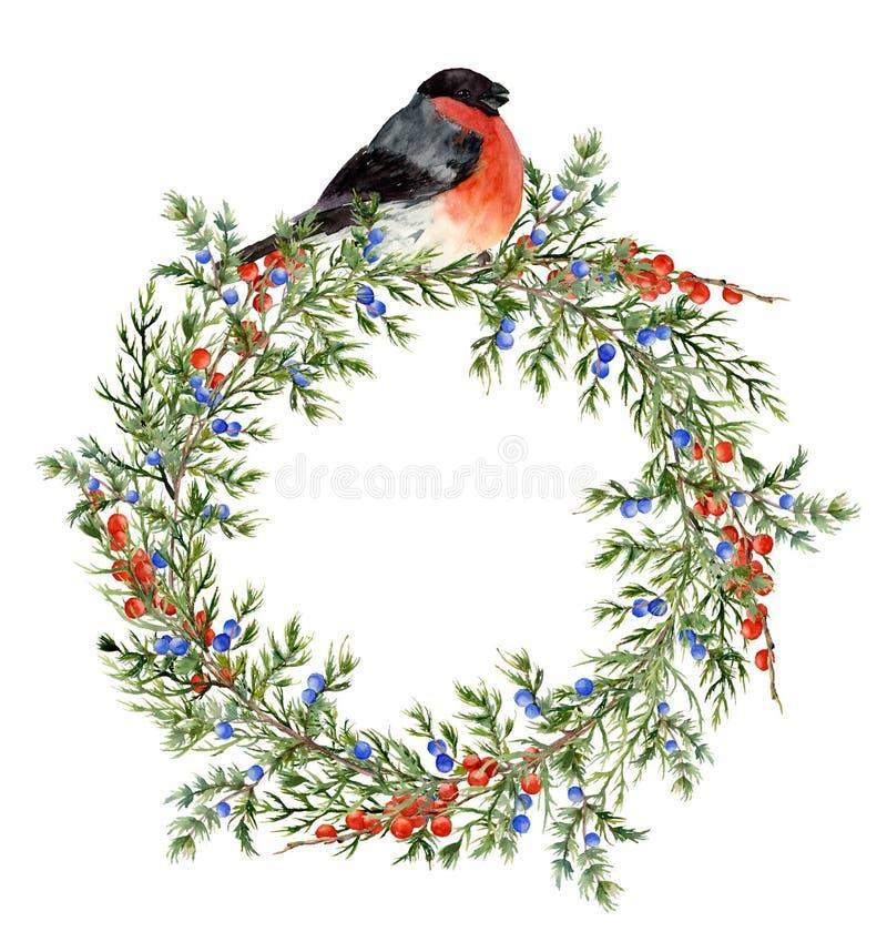 Венок можжевельника акварели с красными ягодами и bullfinch Вручите покрашенную вечнозеленую ветвь с ягодами и птицей на белизне иллюстрация вектора