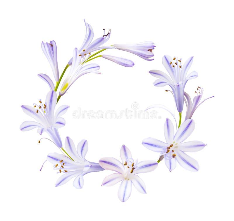 Венок от маленьких фиолетовых цветков изолированных на белизне стоковые фотографии rf