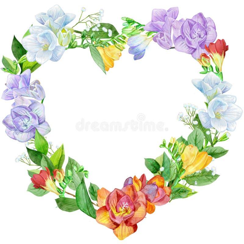 Венок сердца freesia иллюстрации акварели форменный Иллюстрация винтажной акварели красочная на белом фоне бесплатная иллюстрация