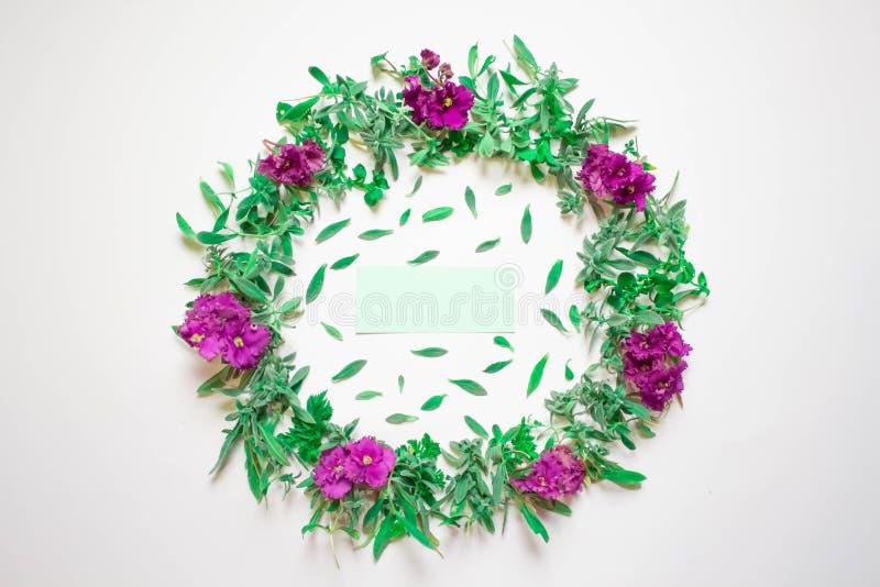 Венок фиолетов на белой предпосылке Круглая рамка пурпурных цветков и свежей травы лето сада цветков цветения Плоское положение,  стоковые изображения rf