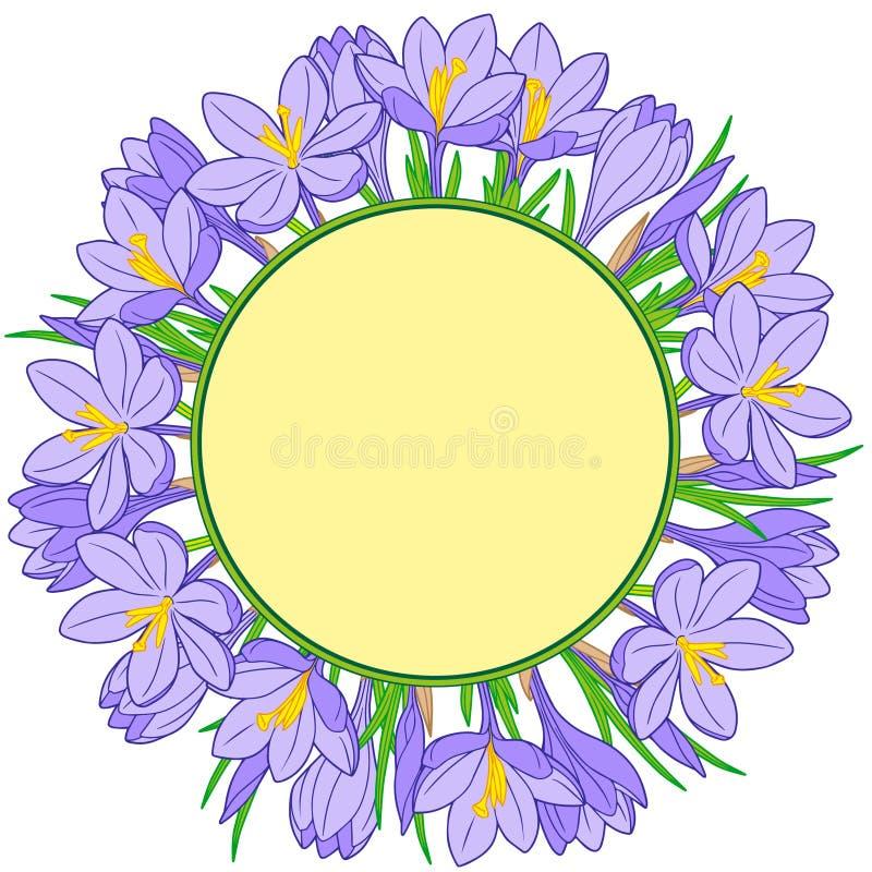 Венок цветка весны крокусов Изолированные элементы вектора иллюстрация вектора
