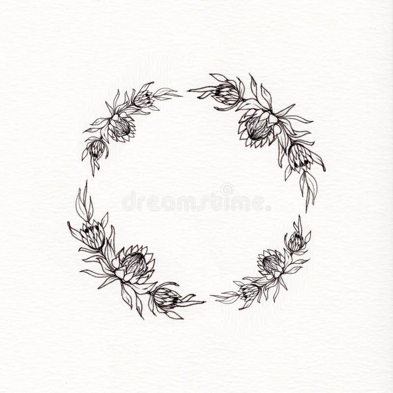 Венок цветка Protea стоковая фотография rf