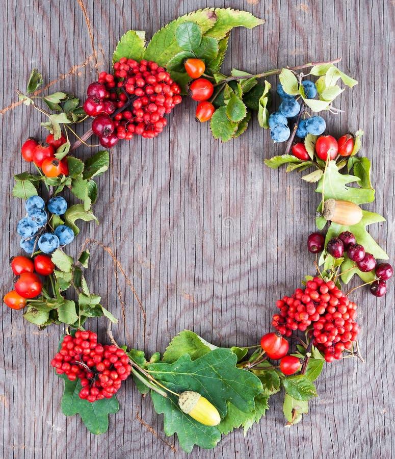 Венок ягоды осени стоковые изображения rf