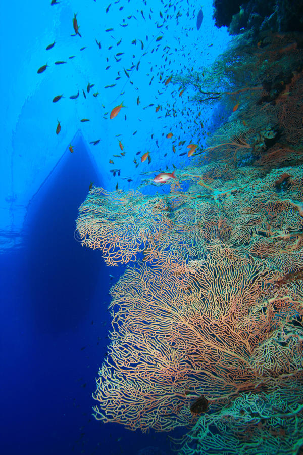 вентилятор пикирования коралла шлюпки стоковые фотографии rf