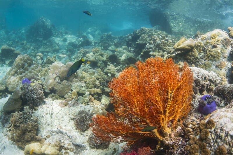Вентилятор завязанный желтым цветом на острове Lipe стоковые фотографии rf