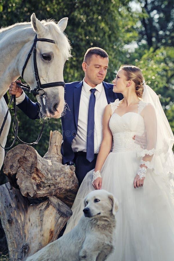 венчание Жених и невеста с белой лошадью стоковая фотография