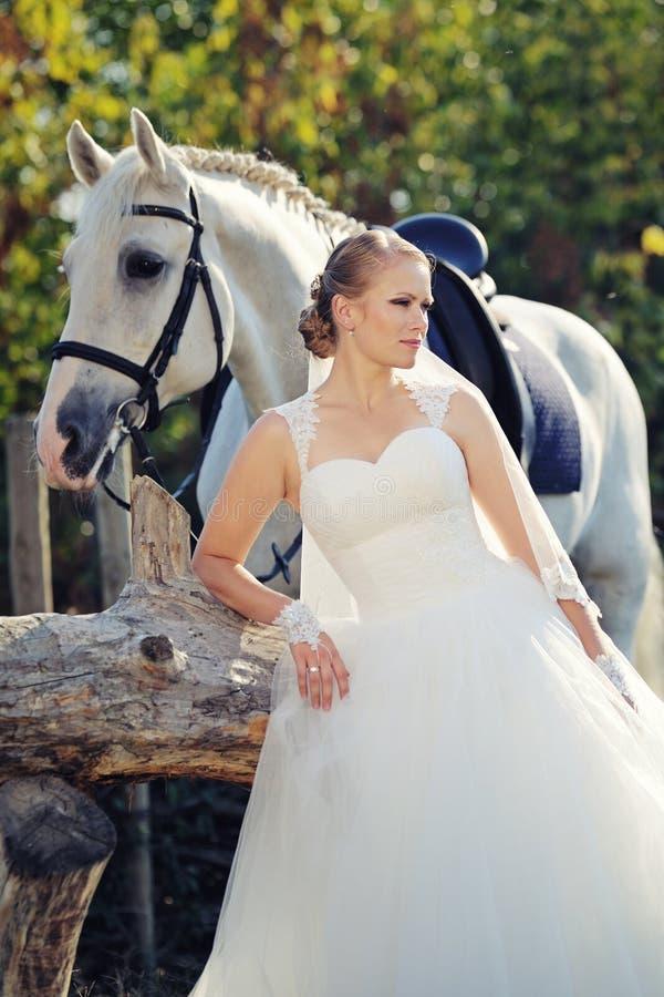 венчание Невеста с белой лошадью стоковая фотография