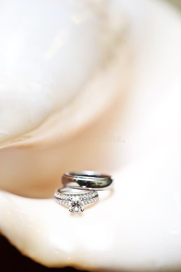 венчание раковины кец стоковые изображения rf