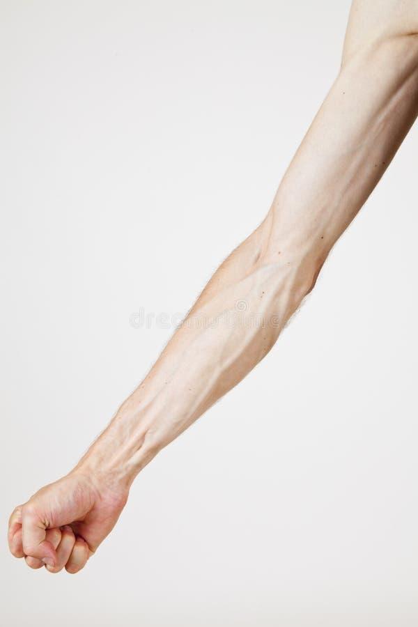 вены человека Стоковые Изображения RF