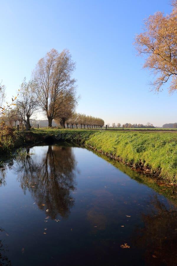Верба Полларда в Нидерланд стоковая фотография