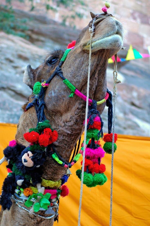 верблюд Индия jodhpur стоковое фото rf