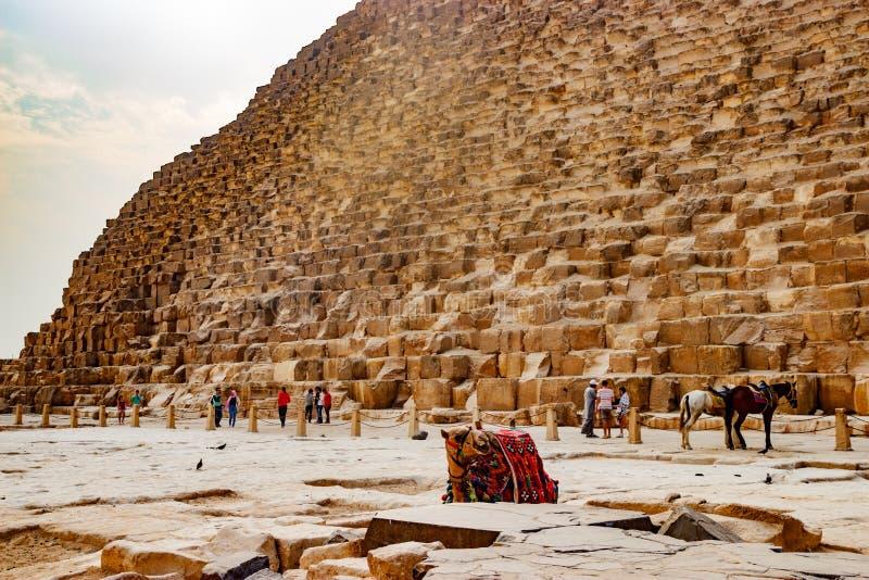 Верблюд около старой пирамиды в Каире, Египте стоковые изображения rf