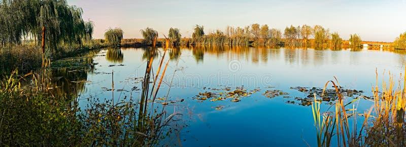 Вербы на озере стоковое изображение rf