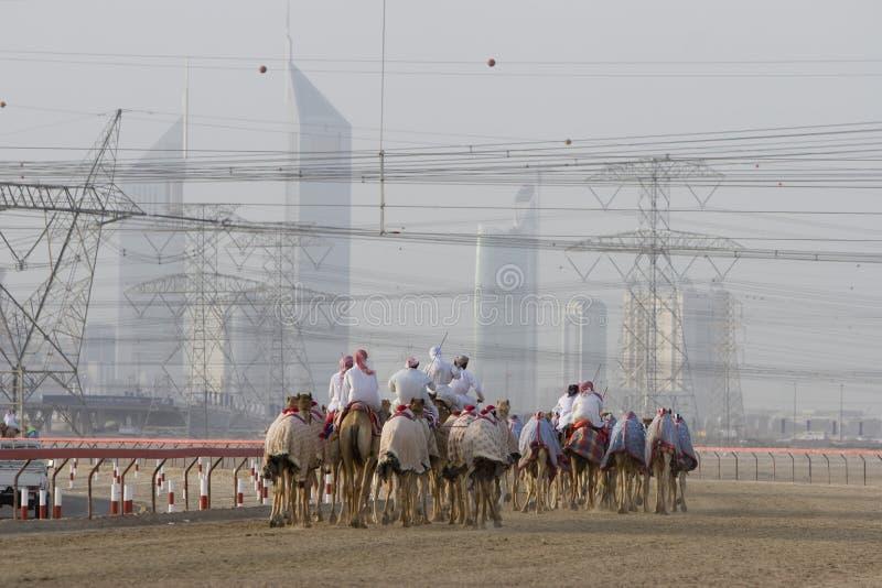 Верблюды и жокеи Дубай ОАЭ тренируя на беговой дорожке верблюда Sheba Al Nad на заходе солнца стоковое изображение