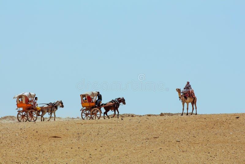 Верблюды и лошадь и телега стоковое фото rf