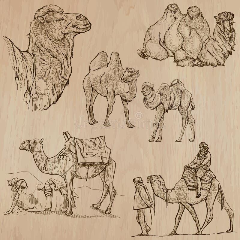 Верблюды - рука нарисованные векторы преобразованный иллюстрация вектора