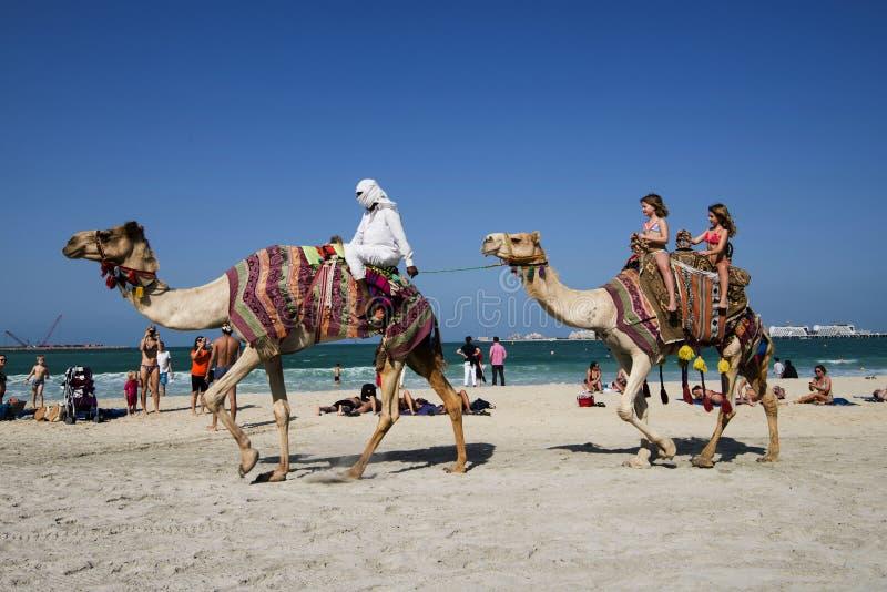 Верблюды, туристы, пляж Дубай стоковые изображения rf