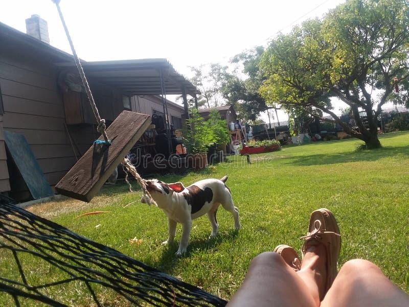 Веревочка игр щенка вытягивая стоковое фото rf