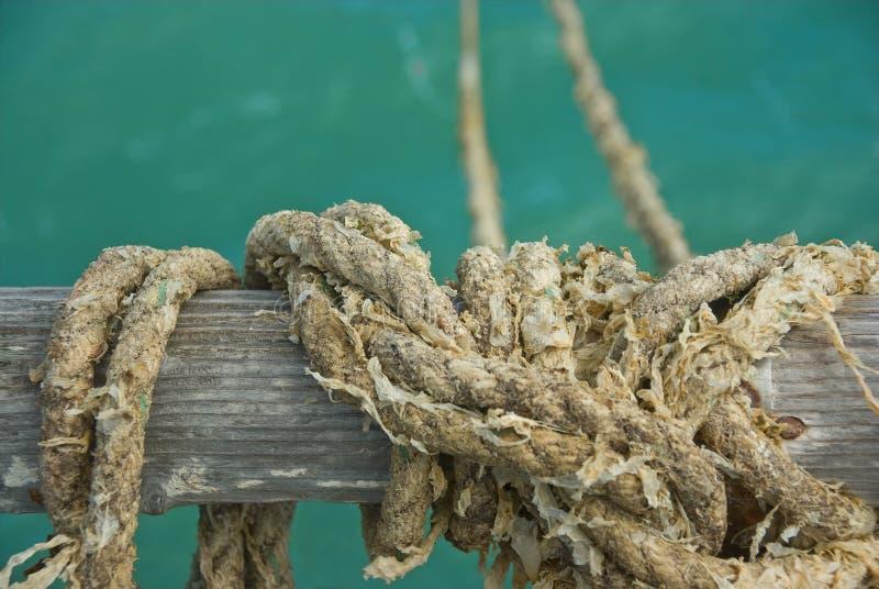 веревочка weedy стоковая фотография rf