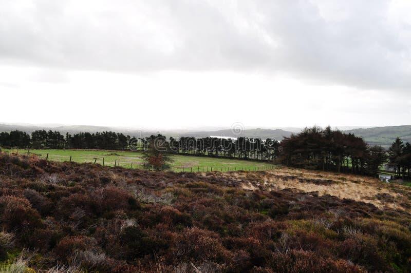 Вересковая пустошь в травах воды деревьев папоротник-орляка Стаффордшира стоковая фотография